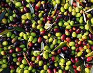 Olives – Refrigerated